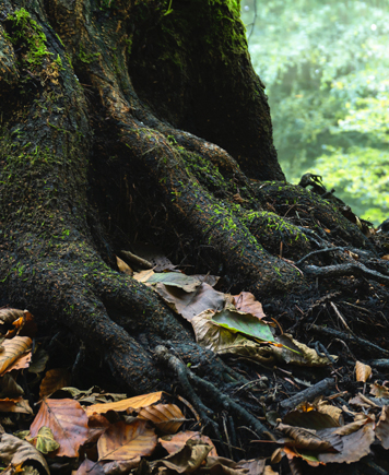 Hidden Roots Intimate Storytelling for Women and Couples